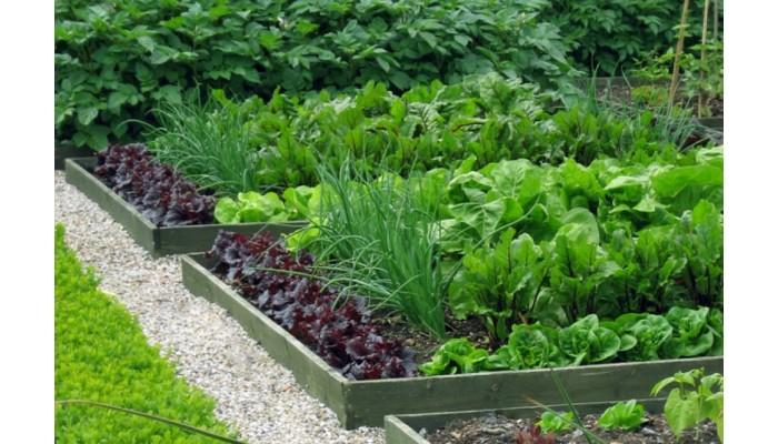 Что в огороде посеем в июле?