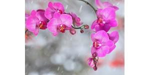 Как сохранить орхидеи? Ухаживаем и соблюдаем условия