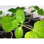 Живая земля для посева огурца…